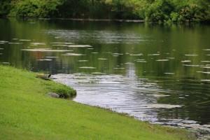 Turtles Relaxing